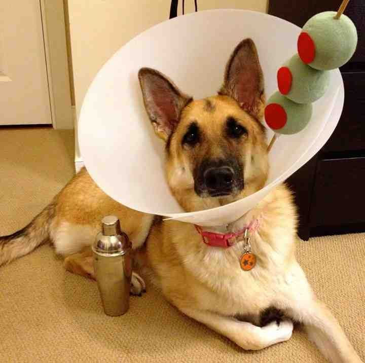 Dog Costume - Martini Drink Cone Of Shame