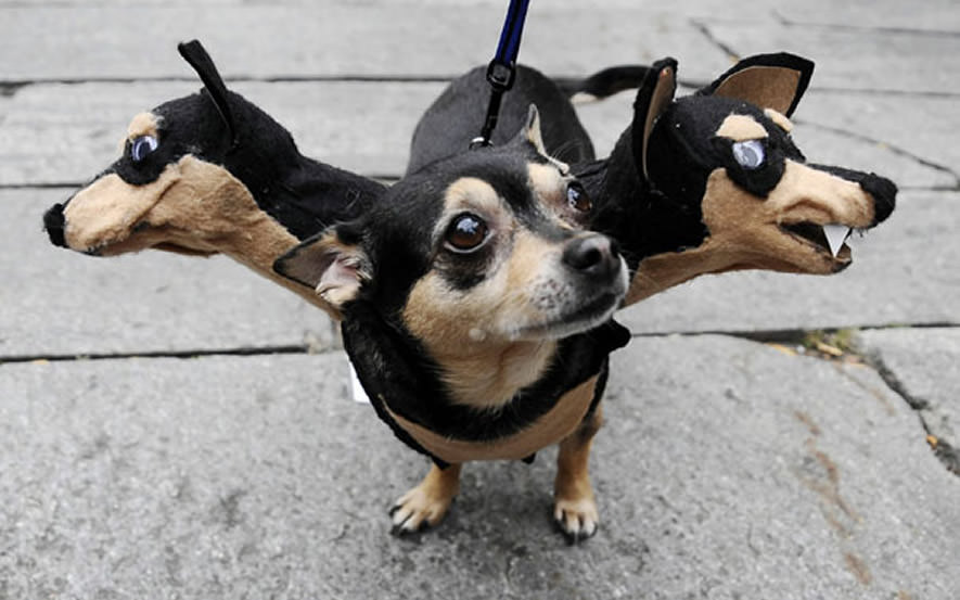 best-animal-halloween-customes-